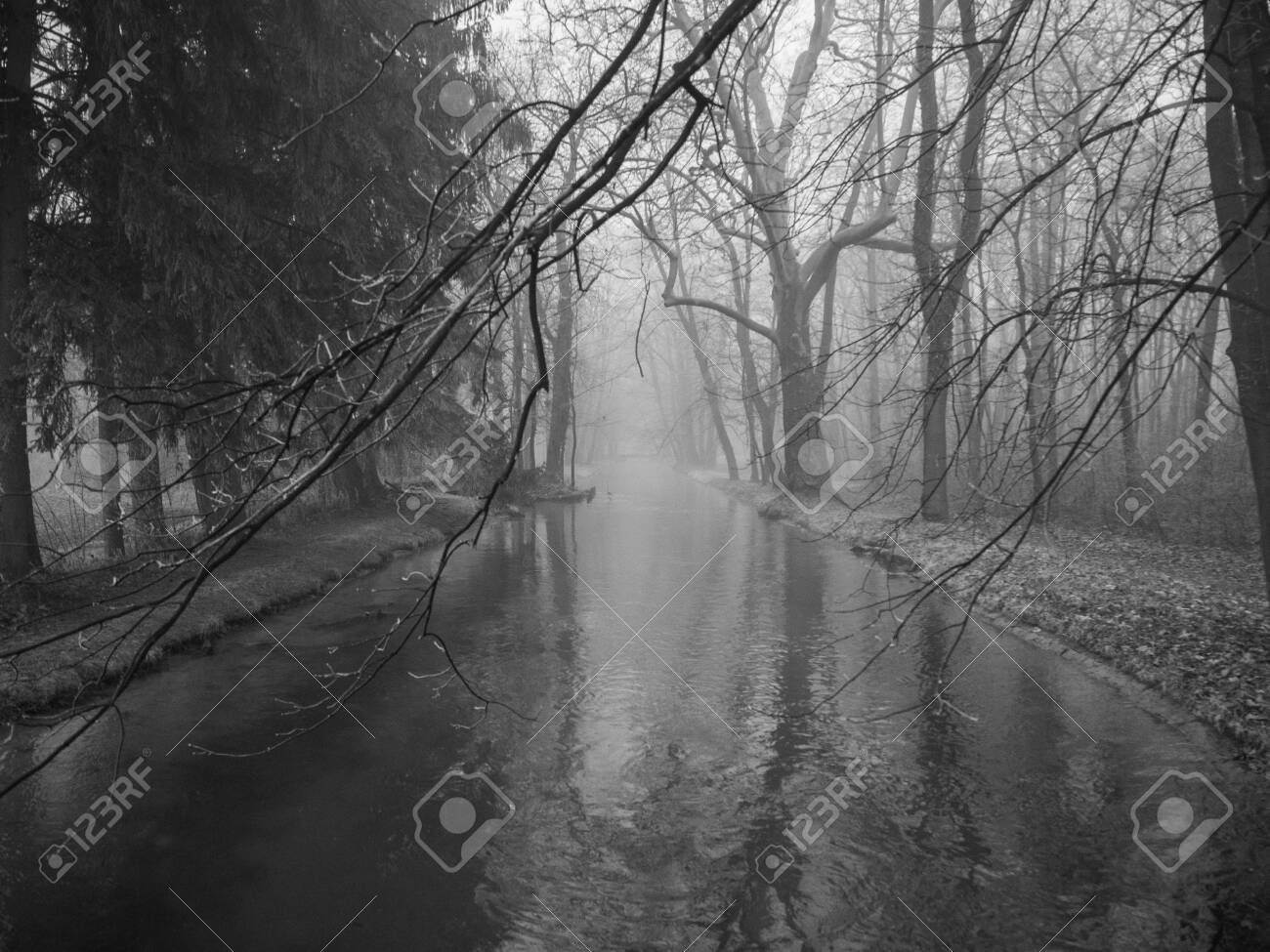 Small river in a forest on a foggy day - 140561537