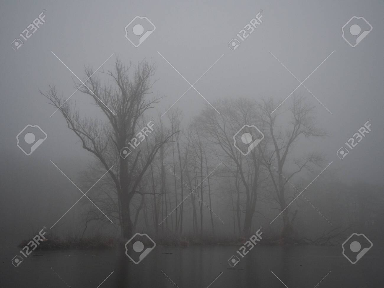 Pond in winter in a foggy forest - 140561778