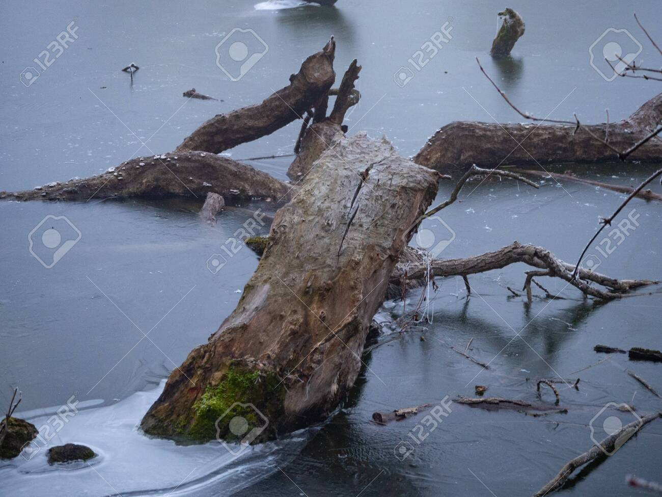 Piece of wood frozen in the ice of a pond - 140561821