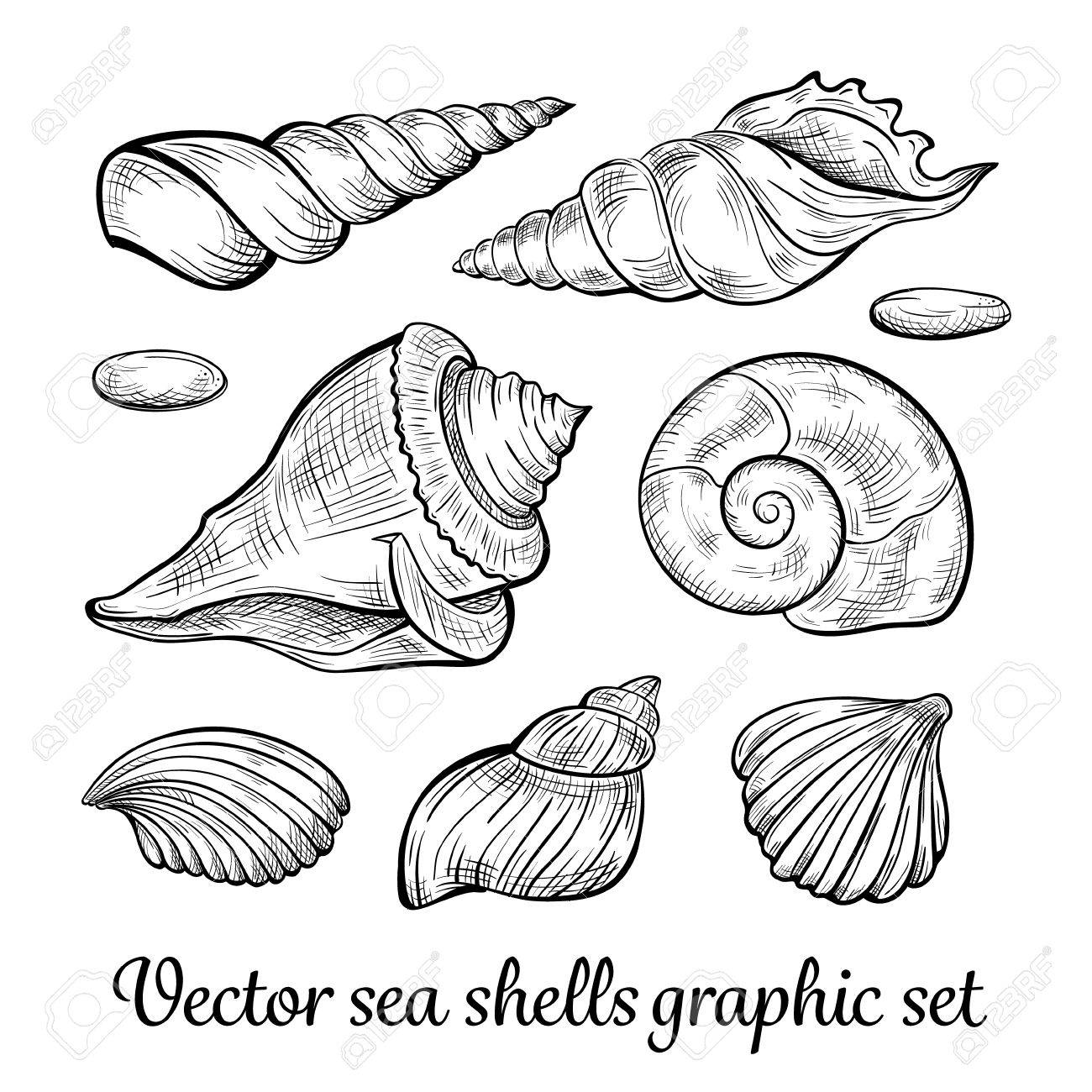 Black and white hand drawn vector seashells collection