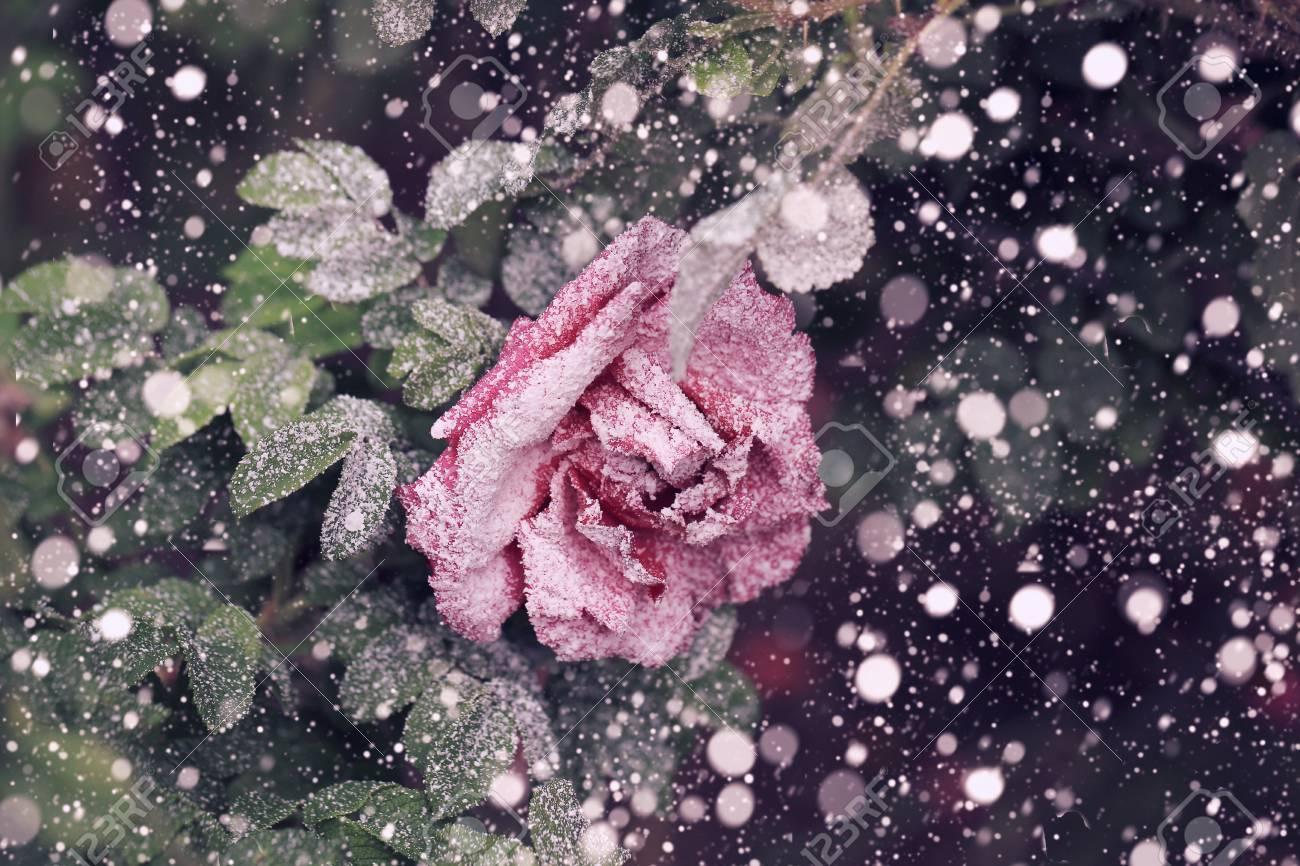 Schneefälle Stiegen Im Winter Schnee Weihnachten Neujahr Weichem ...
