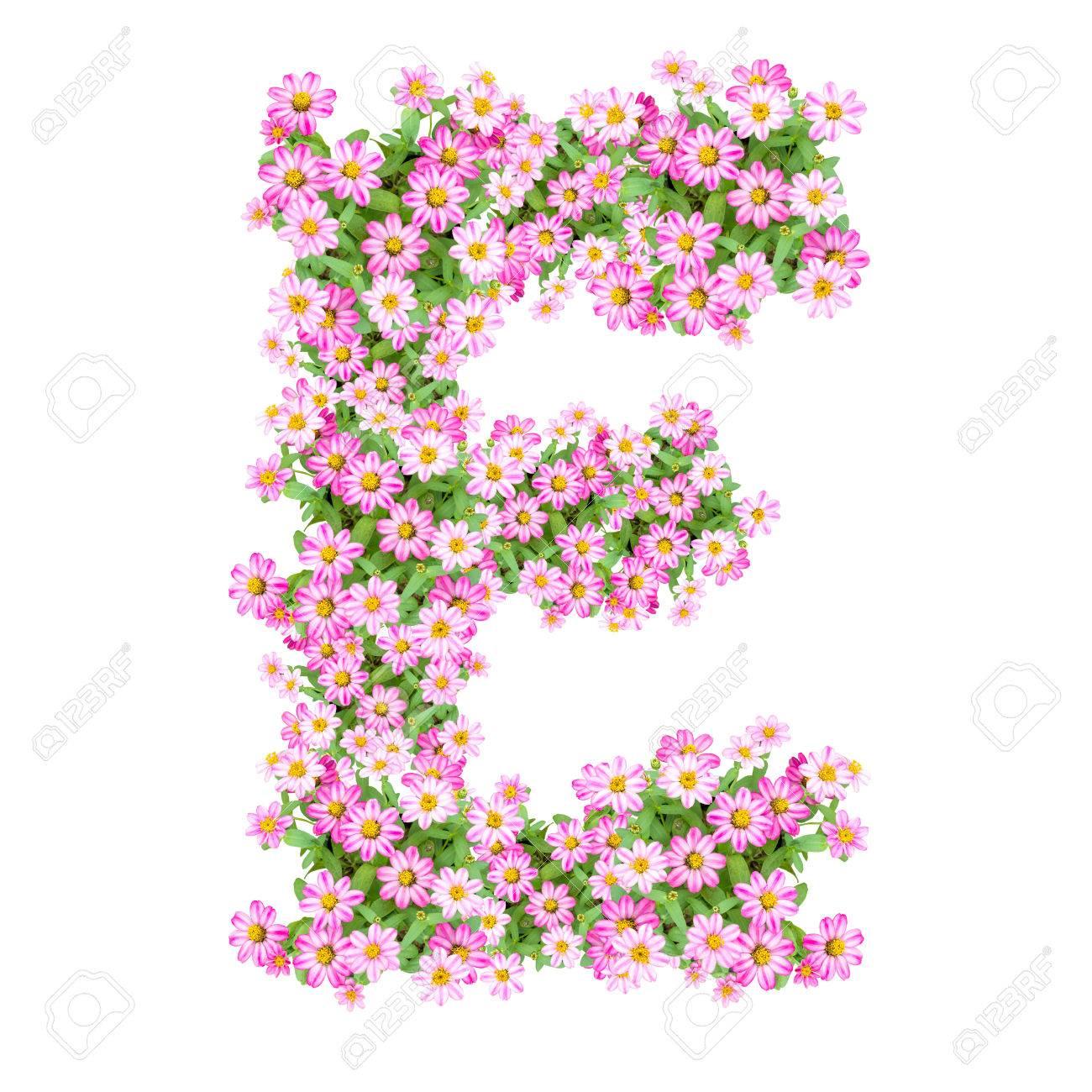 letter e alphabet with zinnia flower abc concept type as logo