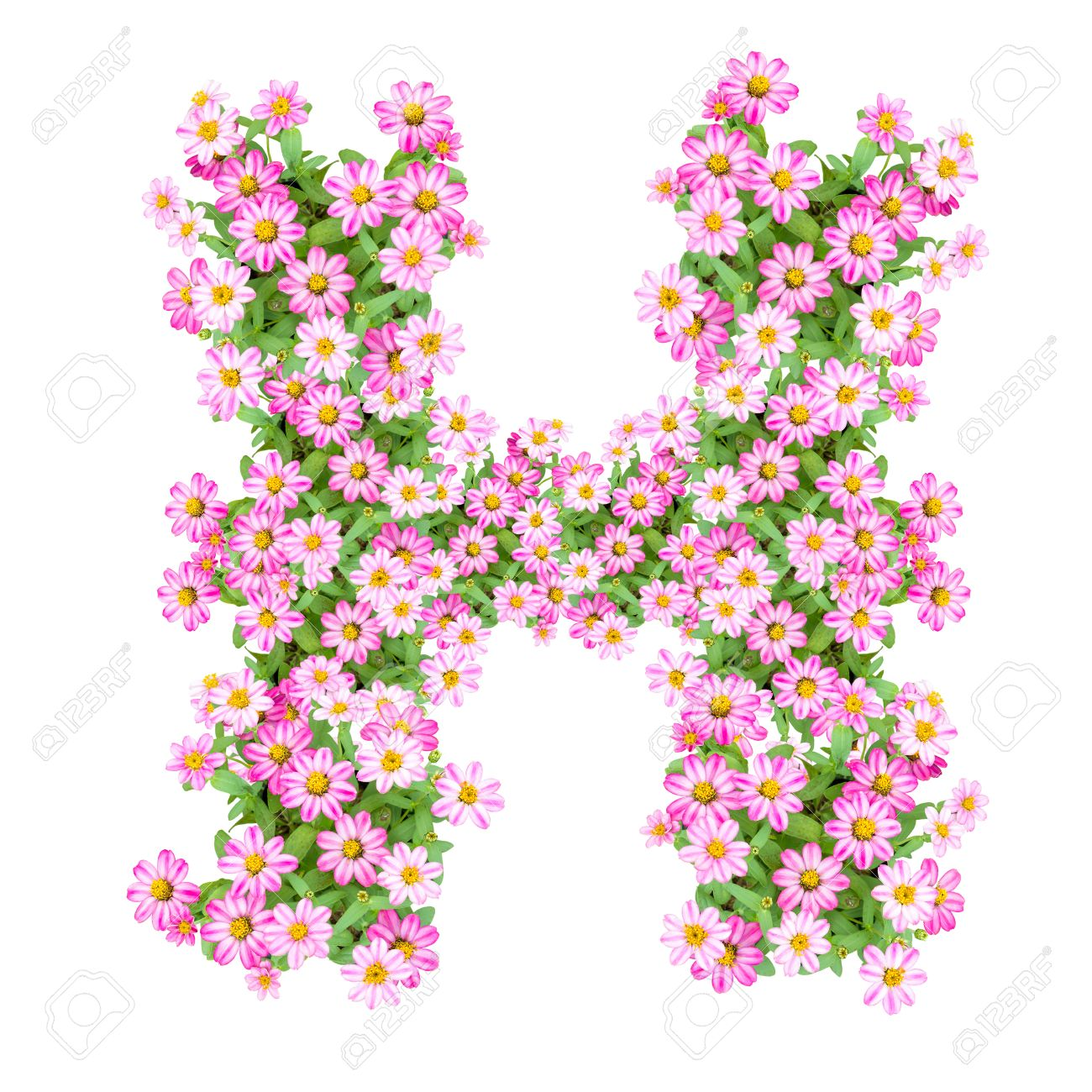 letter h alphabet with zinnia flower abc concept type as logo