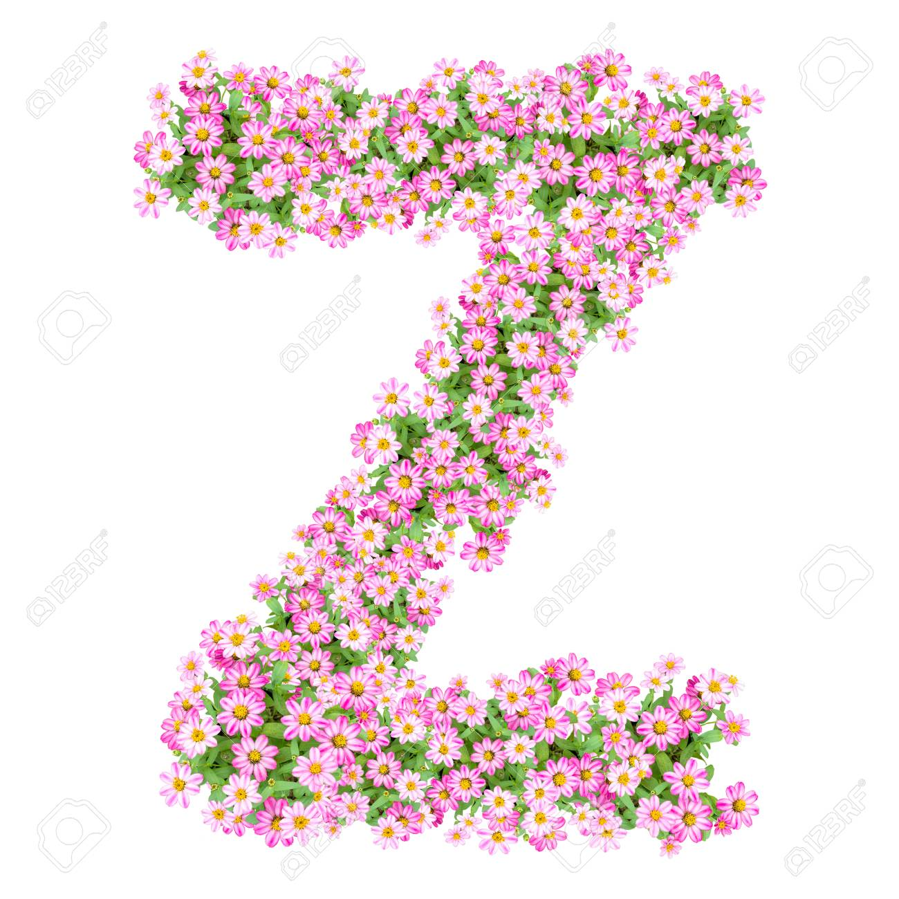 Letter Z Alphabet With Zinnia Flower ABC Concept Type As Logo Typography Design Stock Photo