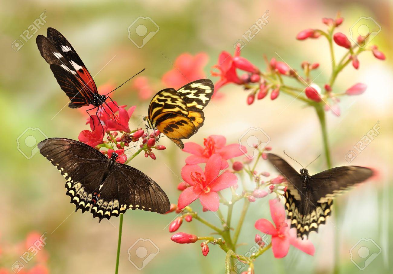 Pink butterflies | flowers, butterflies &amp- scenic pictures | Pinterest