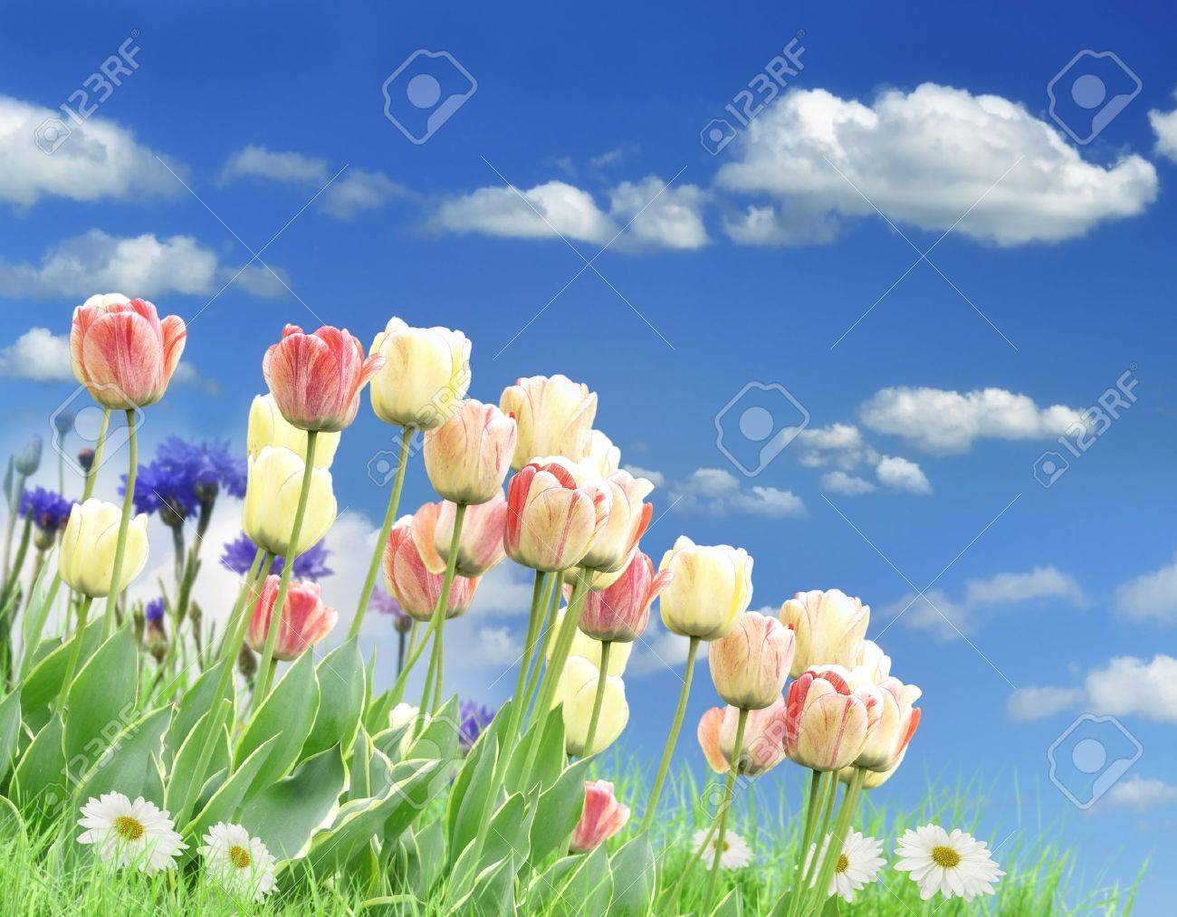 Colorful spring flowers and grass against a blue sky stock photo colorful spring flowers and grass against a blue sky stock photo 12196979 dhlflorist Choice Image