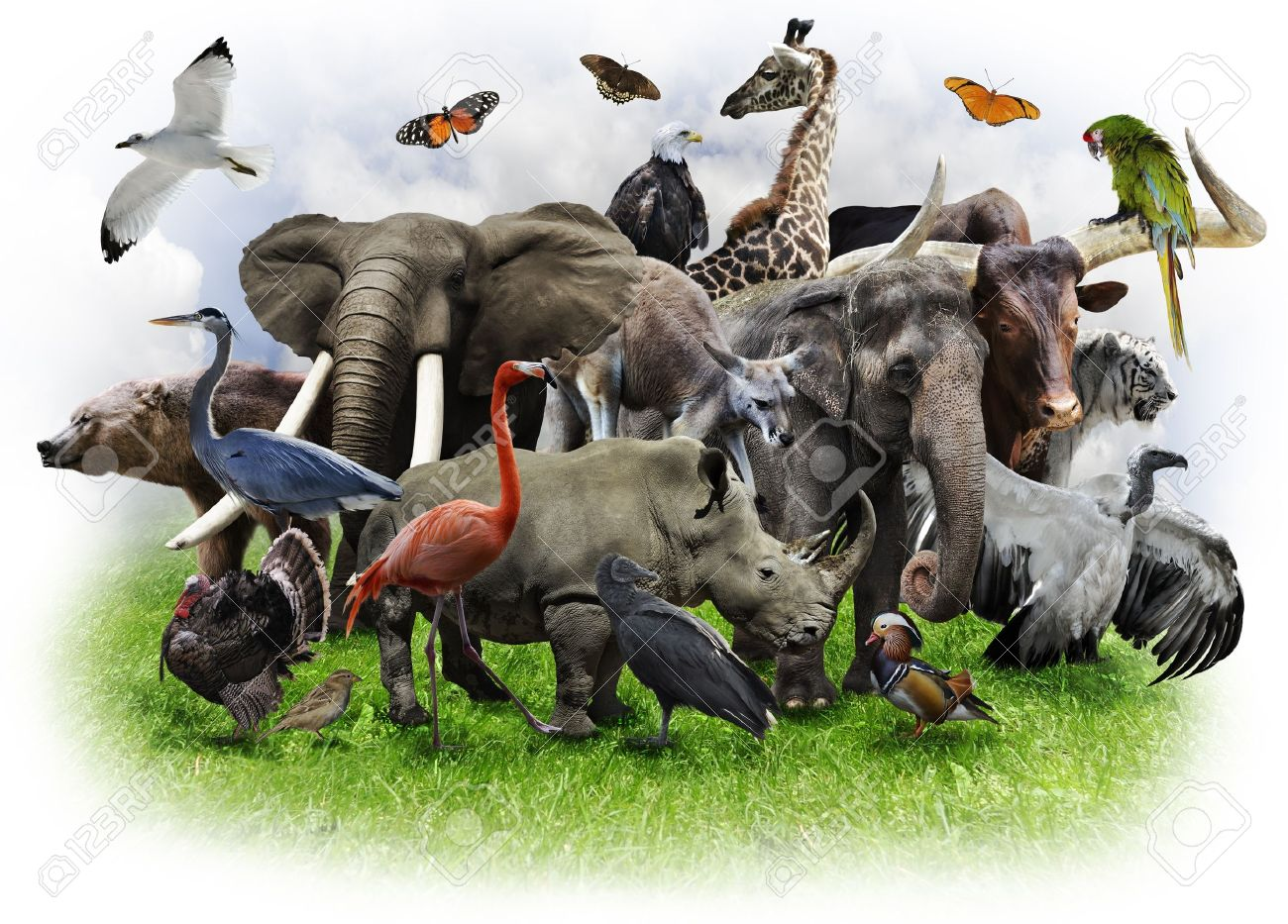 A Collage Of Wild Animals And Birds Stock Photo