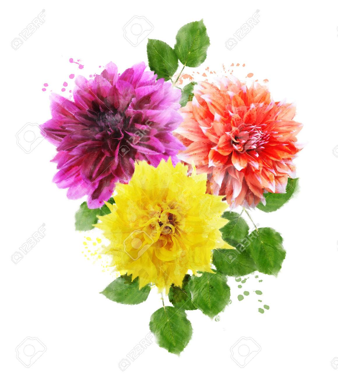 Watercolor Digital Painting Of Dahlia Flowers Stock Photo Picture And Royalty Free Image Image 32701980