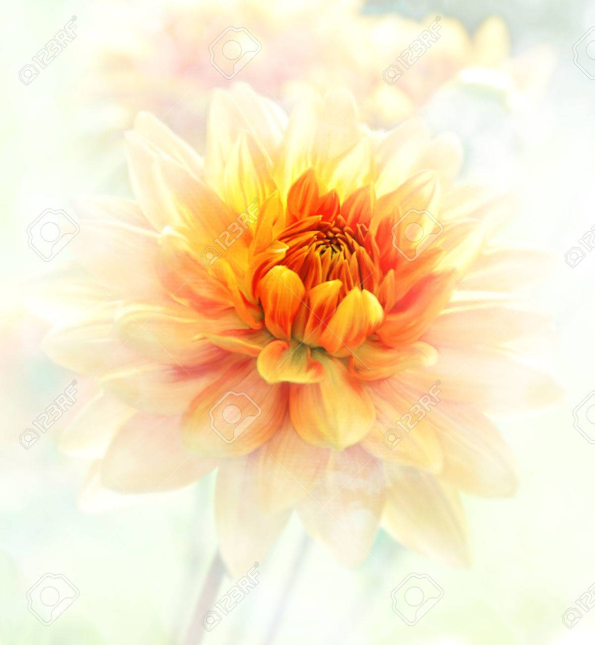 Digital Painting Of Dahlia Flowers Soft Focus Stock Photo Picture And Royalty Free Image Image 37427580