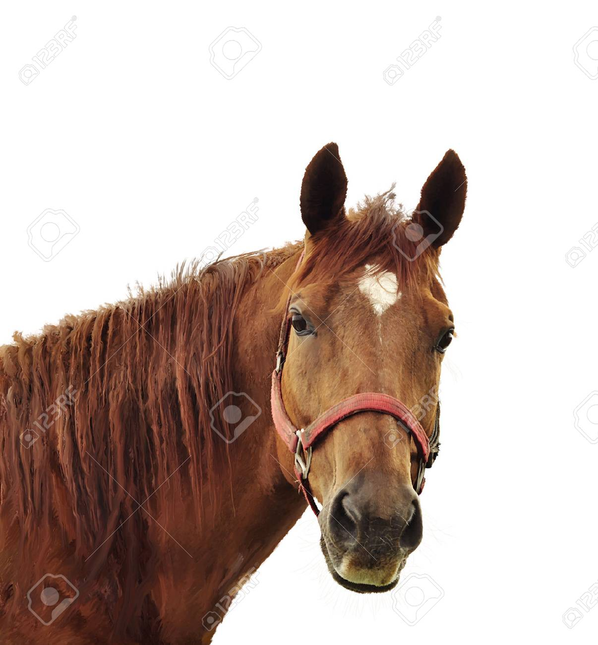 Digital Painting Of Brown Horse Head Stock Photo Picture And Royalty Free Image Image 39805950