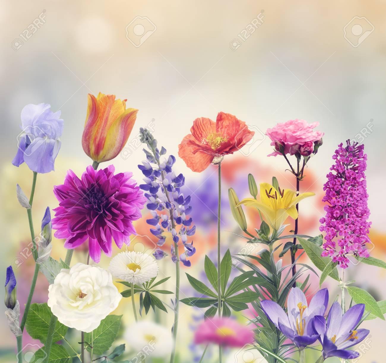 Variété de fleurs fleurissent dans ce jardin