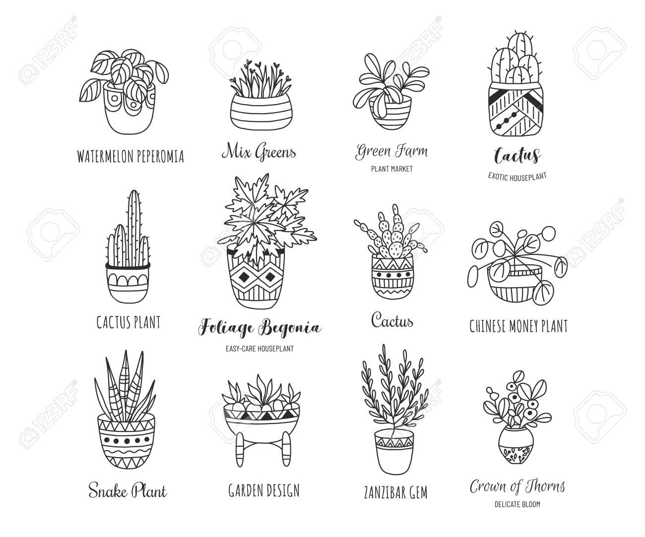 House Plants Hand Drawn Illustration Set Simple Elegant Modern Royalty Free Cliparts Vectors And Stock Illustration Image 117278979