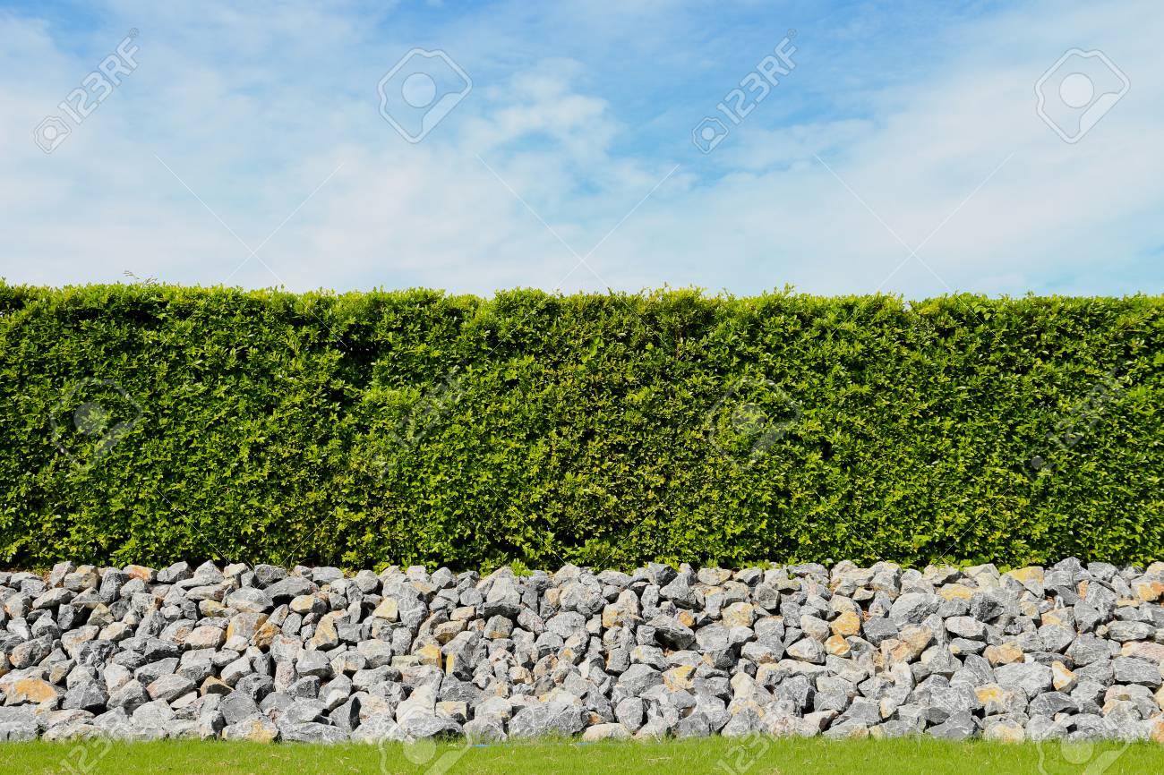 schönen grünen zaun, grünen wiese und stein mit blauem himmel und
