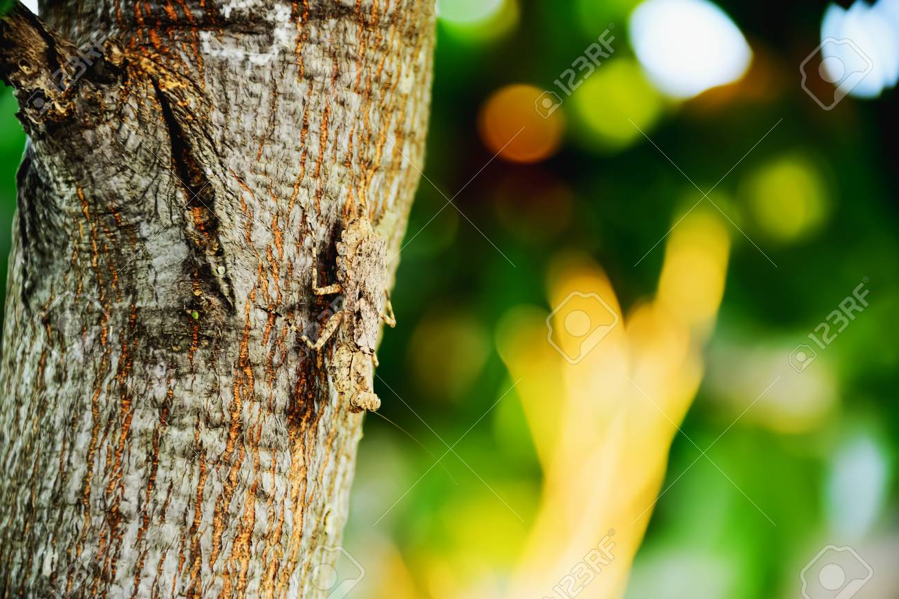 Mantis Has A Color Similar To The Color Of The Trunk Of The Tree ...