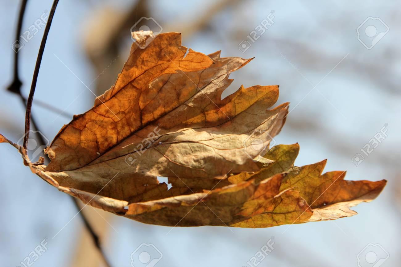 leaf Stock Photo - 13112355