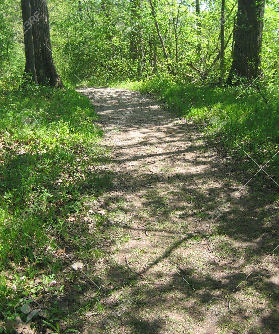 Trail through woods in Ann Arbor, Michigan Stock Photo - 4657332