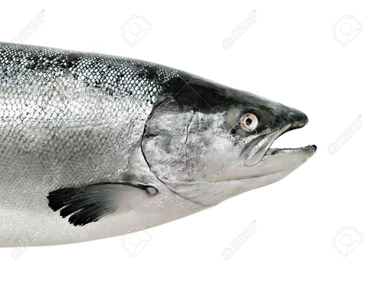 Salmon fish close up isolated on white Stock Photo - 6852587