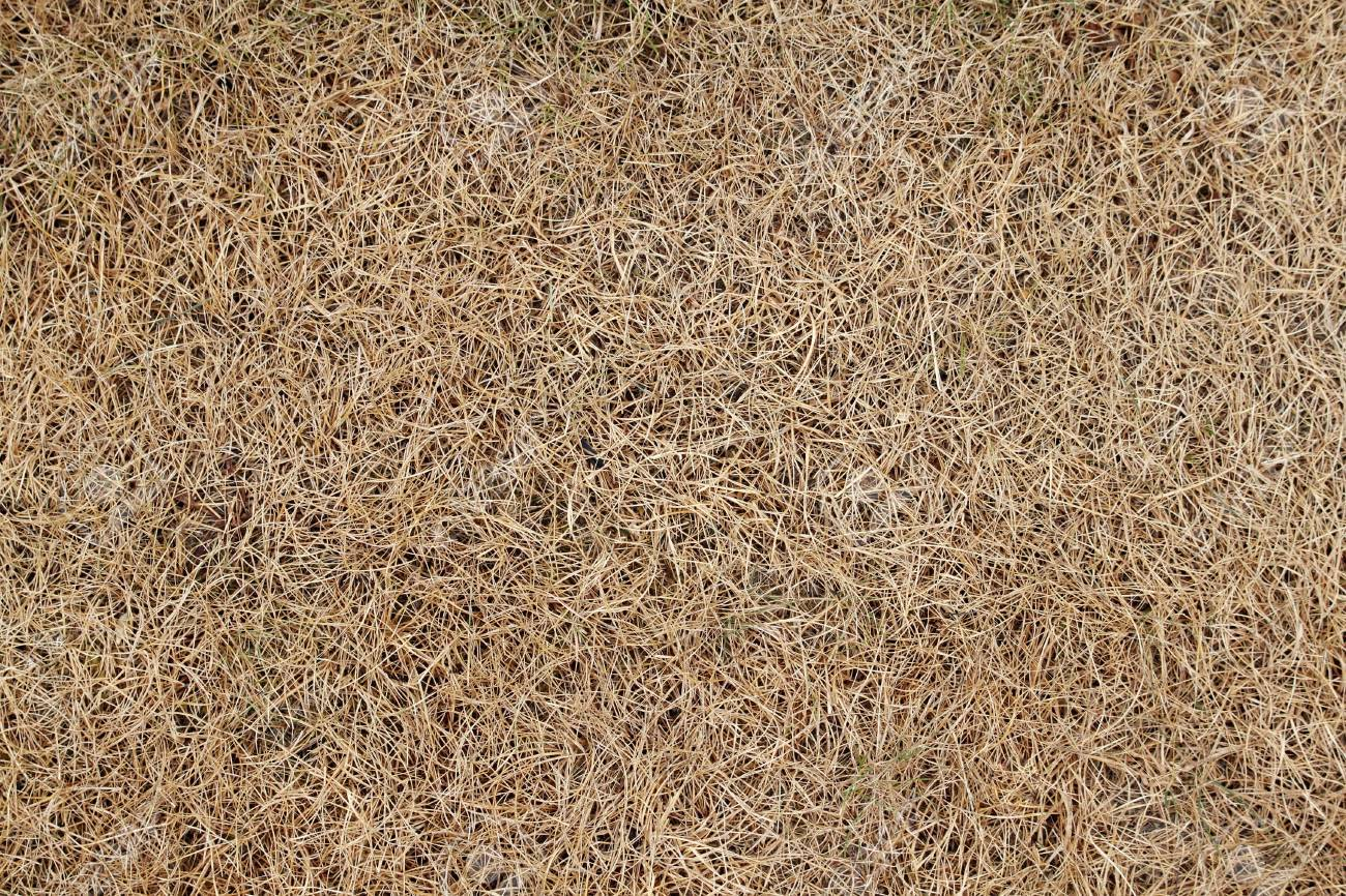 Dry lawn grass as a natural background Stock Photo - 7584941
