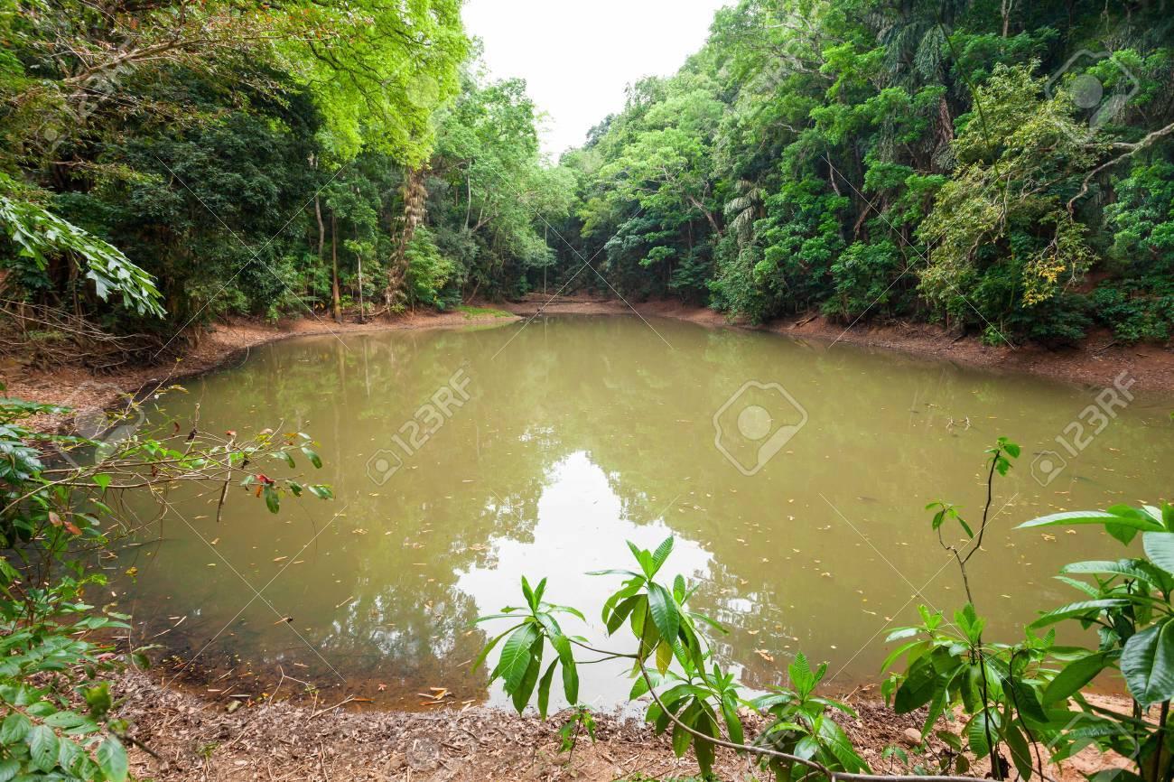 Royal Pond in Kandy Udawatta Kele Royal Forest Park or Udawattakele Sanctuary in the city of Kandy, Sri Lanka - 80540456
