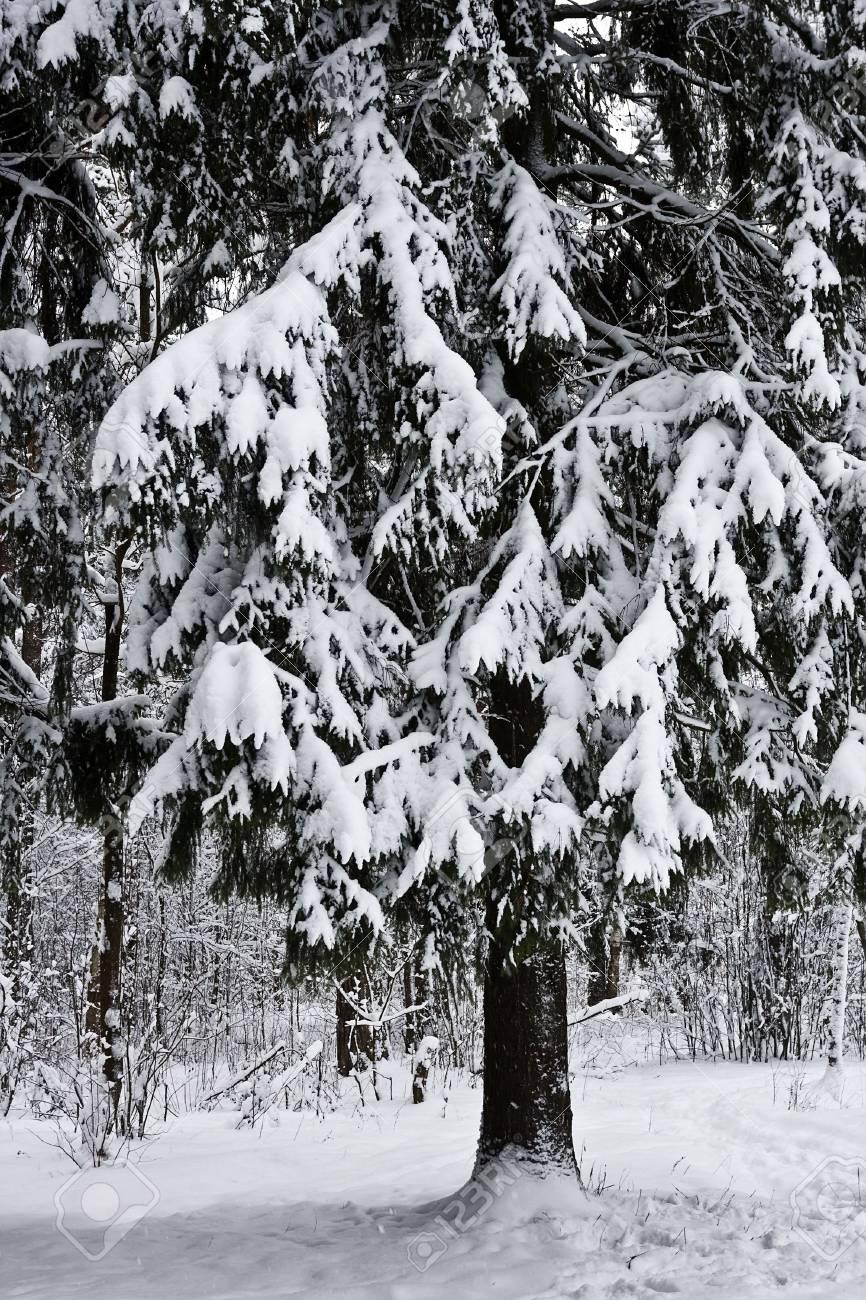 Winter forest under white snow Stock Photo - 6536993