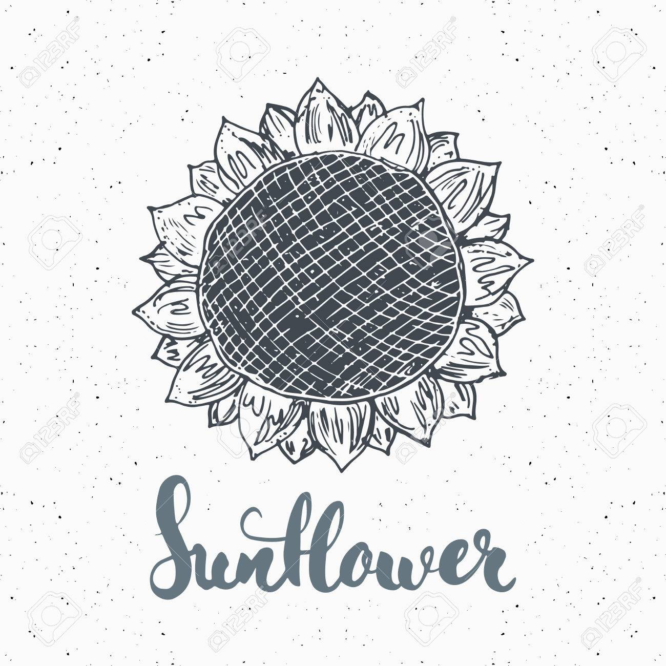 sunflower sketch with lettering vintage label hand drawn grunge