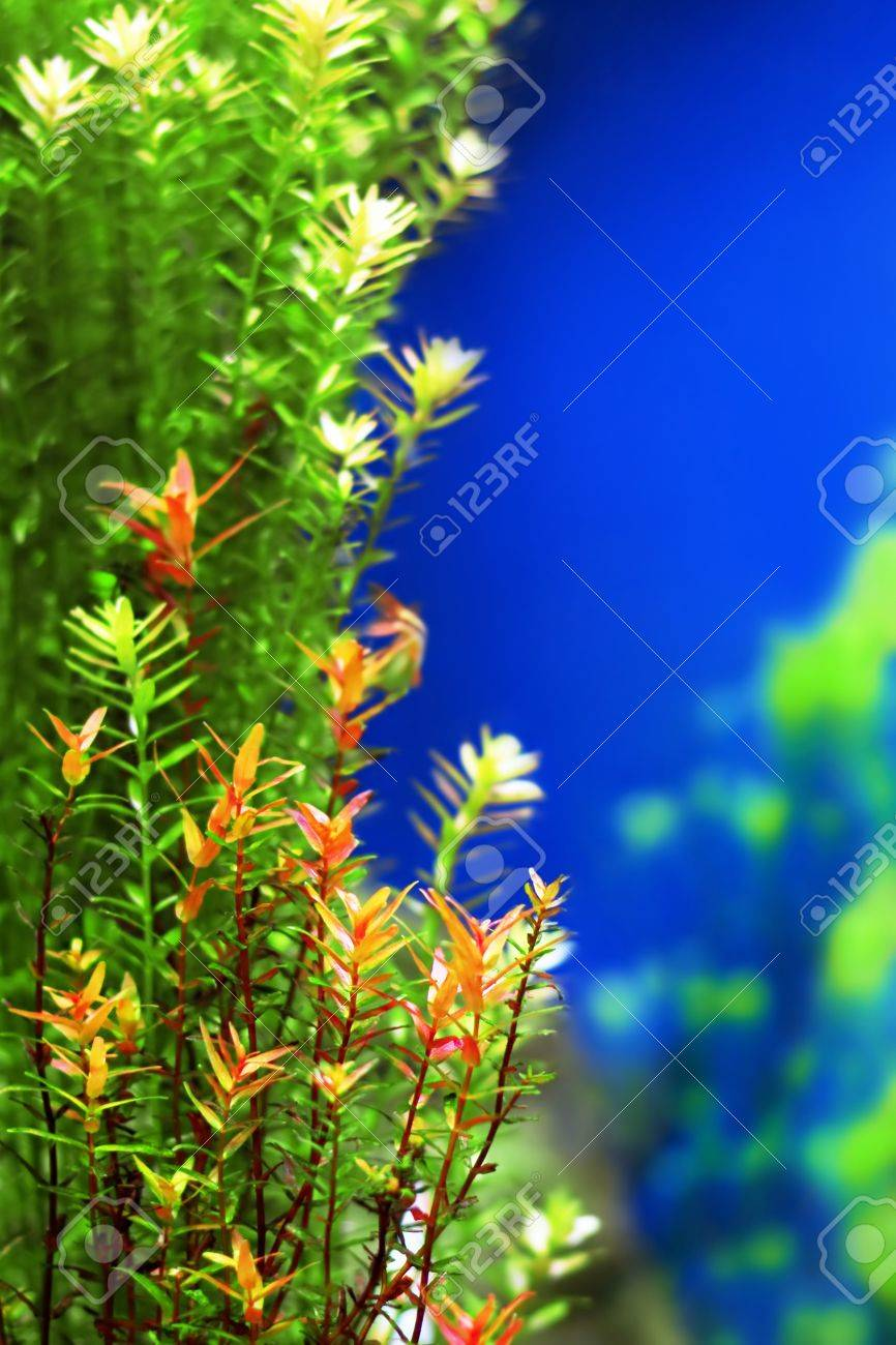 Tropical underwater plants Stock Photo - 16570403