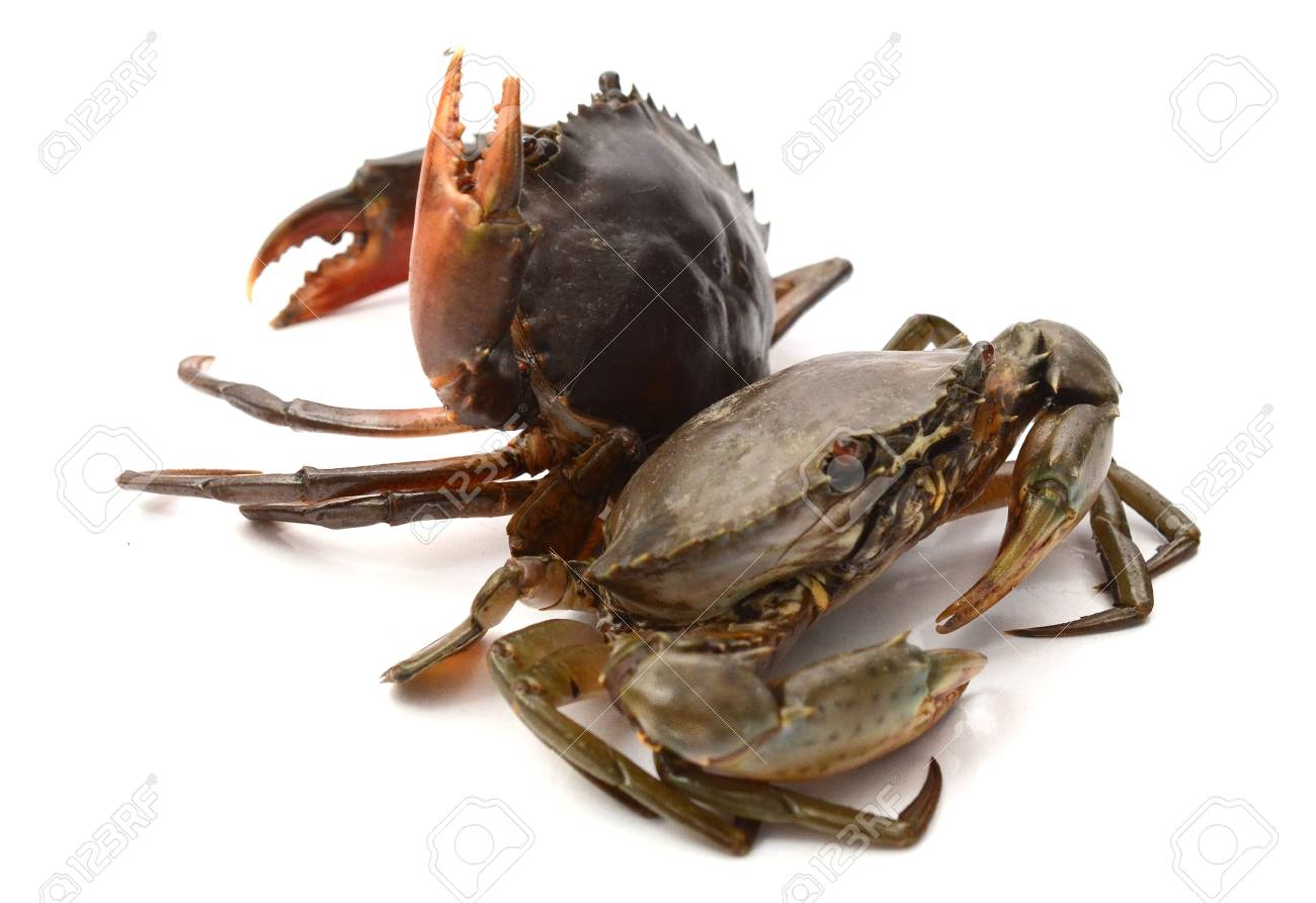 Boiled crab isolated on white - 118103352