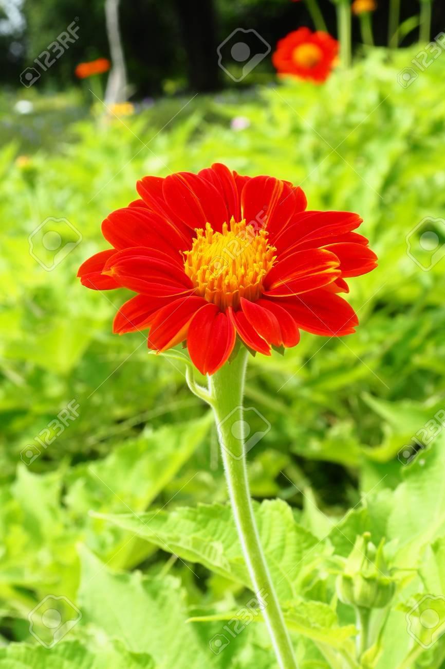 Beautiful Single Flowers Closeup Anture Background Flower Macro