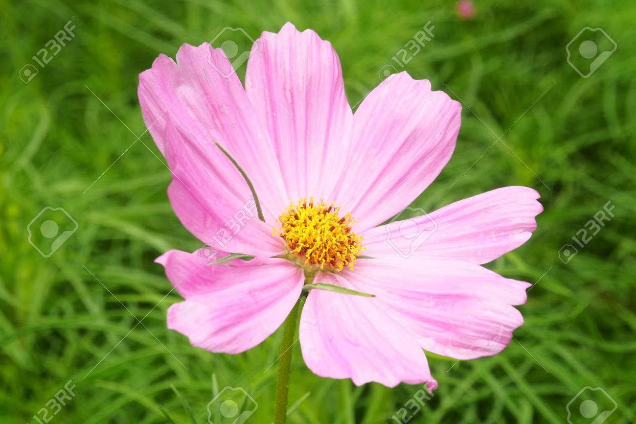 Beautiful Single Flowers Closeup Anture Backgroundflower Macro