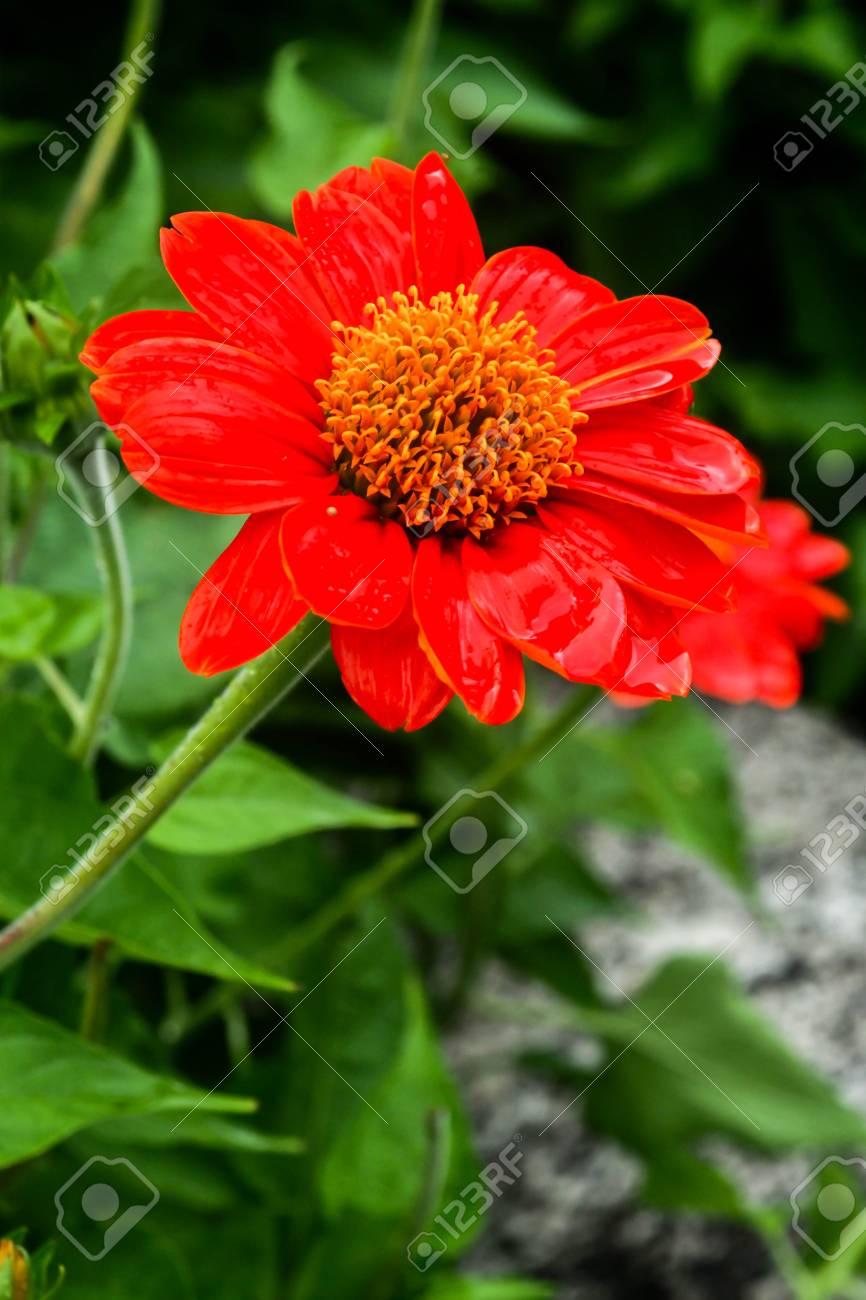 Beautiful Single Flowers Closeup Nature Backgroundflower Macro