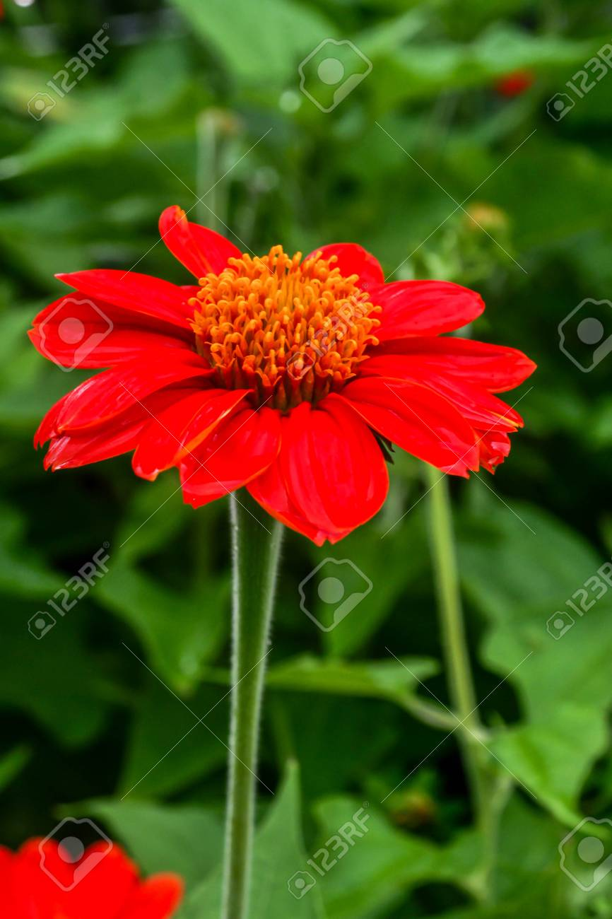 Beautiful Single Flowers Closeup Nature Background Flower Macro