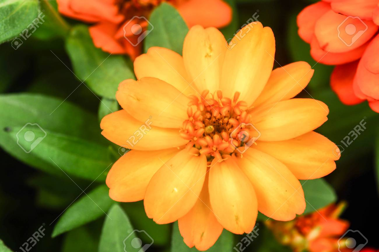 beautiful single flowers closeup nature background,flower macro