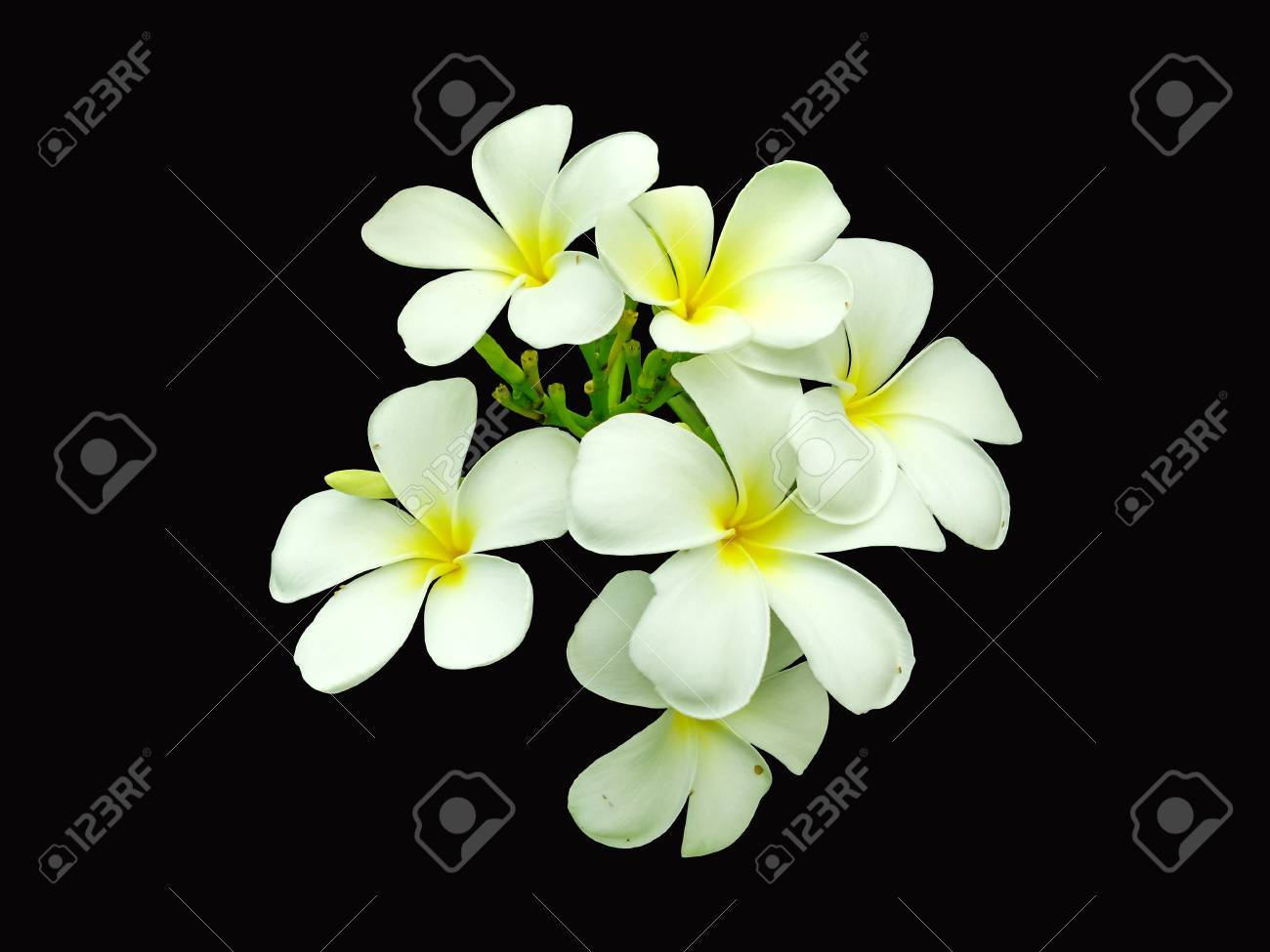 White Flowers Isolated On Black Color Background For Retouch Stock ...