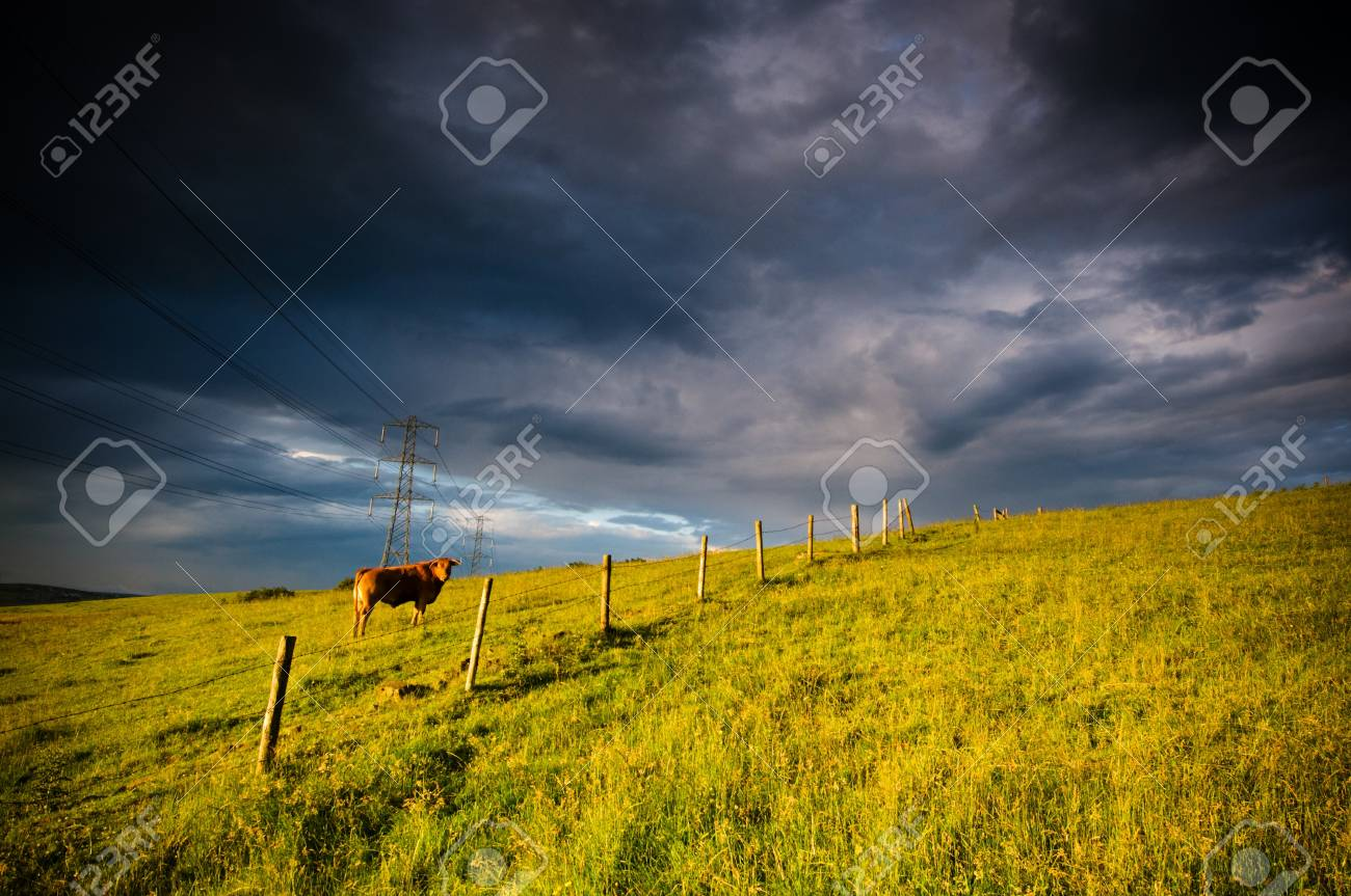 A lone cattle grazing in a field in English countryside Stock Photo - 14741168