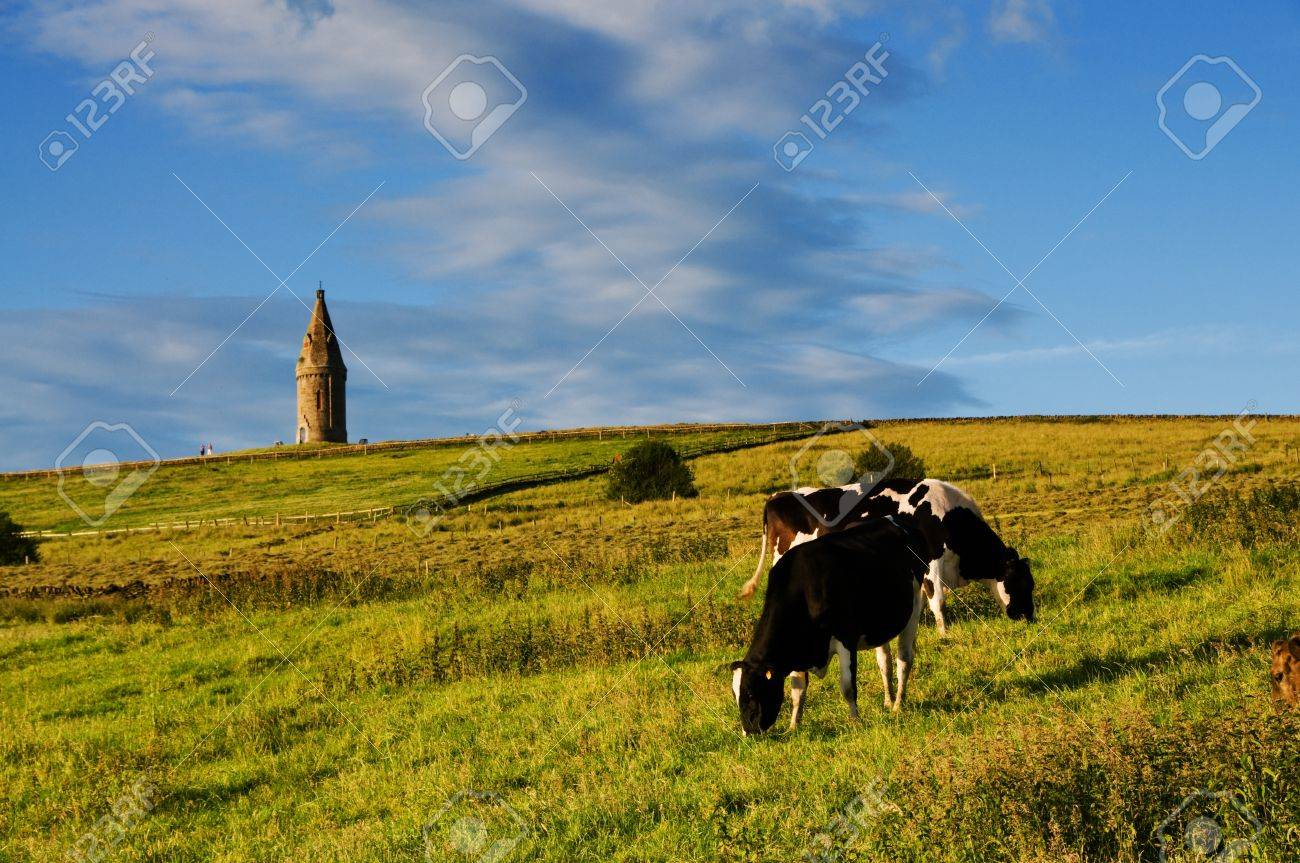 Cattle grazing at Hartshead a scenic place with great view of Manchester, England Stock Photo - 14868994