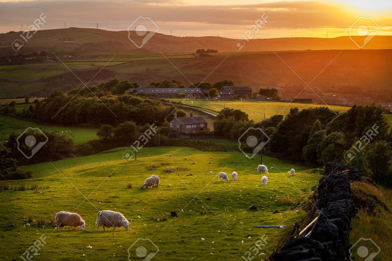 Sheep grazing in a beautiful landscape in the British countryside near the outskirts of Manchester. - 26057425
