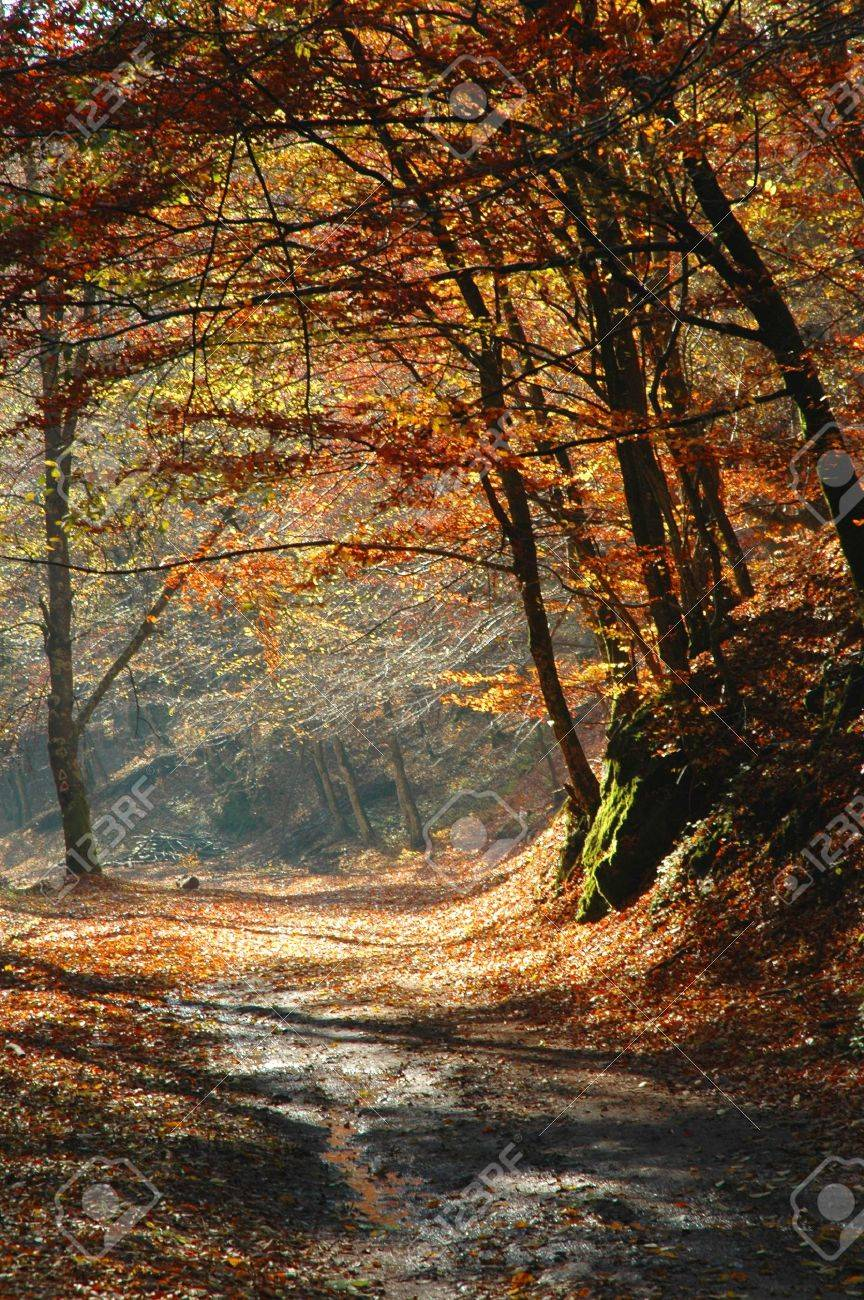 Autumn colors in the forest Stock Photo - 11930155
