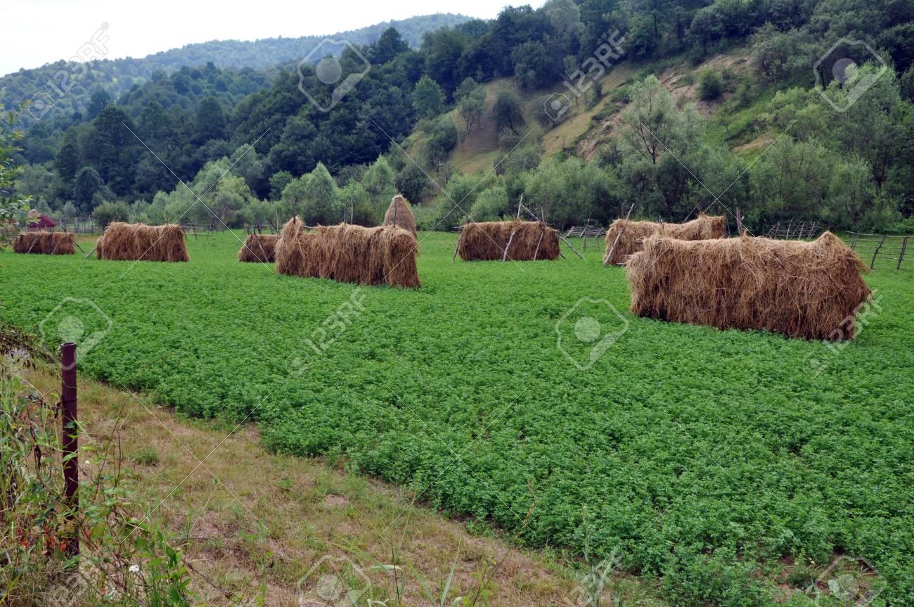 Countryside haystacks Stock Photo - 16479111