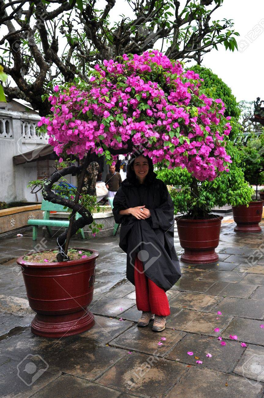 Young Woman Standing Under A Blooming Pink Flower Bonsai Tree Stock