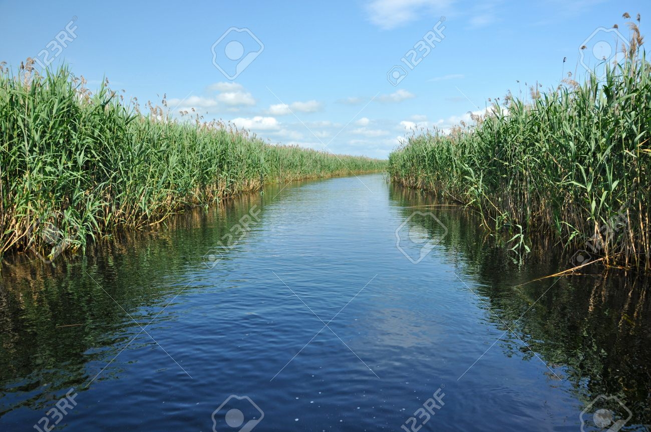 Water Channel In The Danube Delta With Swamp Vegetation And ...