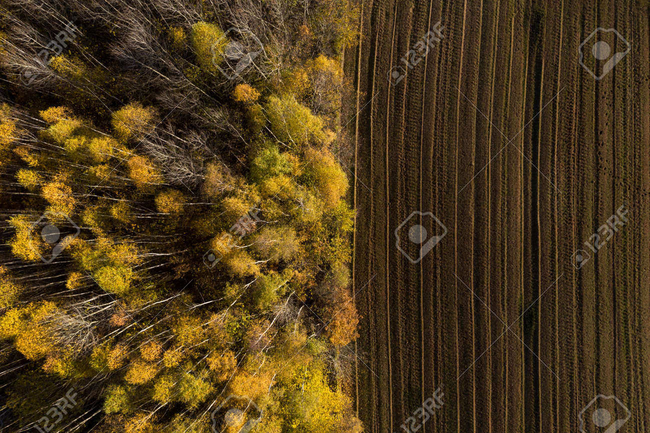 Aerial view of deforestation area for agricultural land by drone. Contact zone between forest and plantation - 158821092