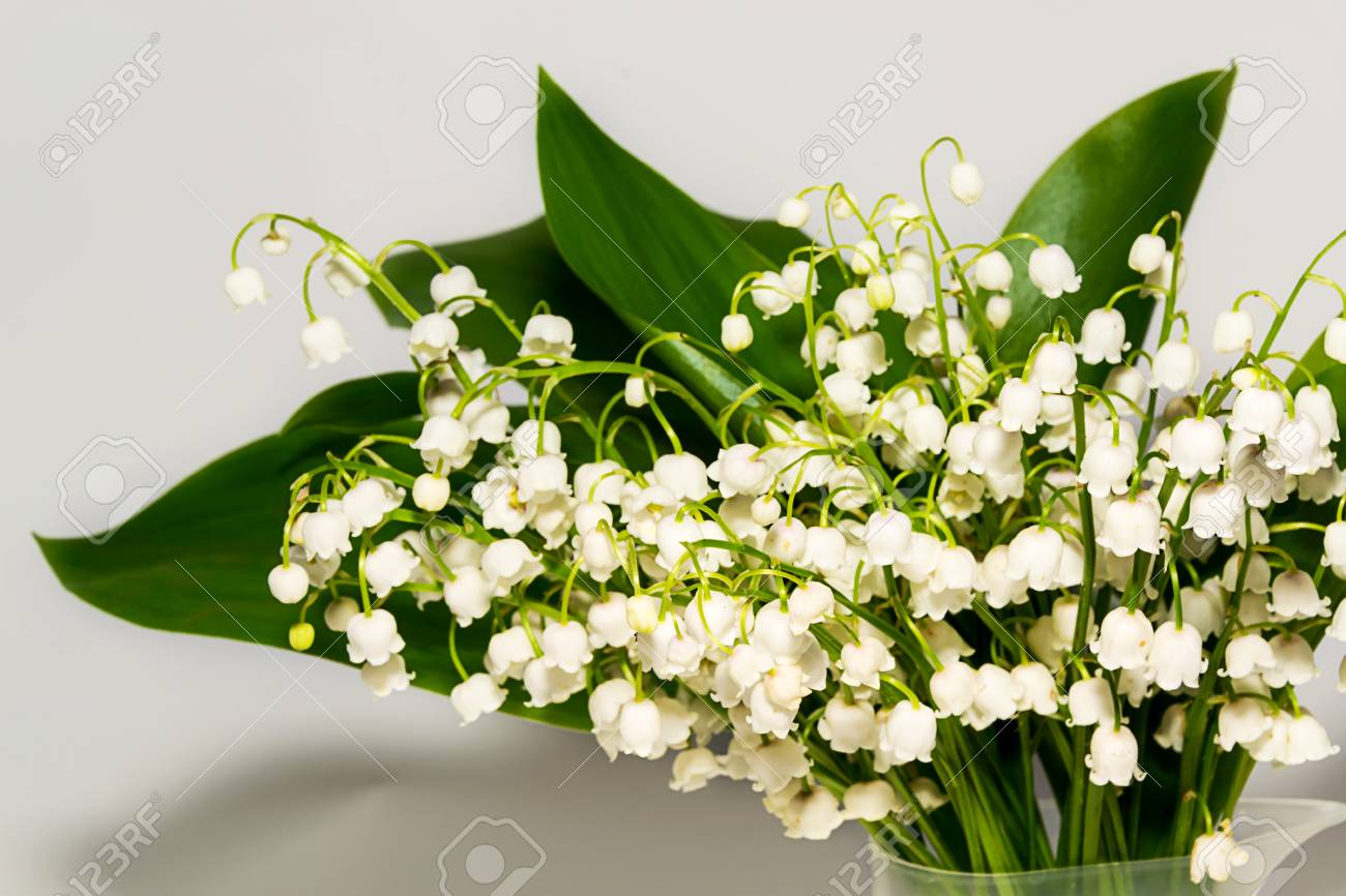 Lily of the valley spring flowers perfume stock photo picture and spring flowers perfume stock photo 69894722 mightylinksfo