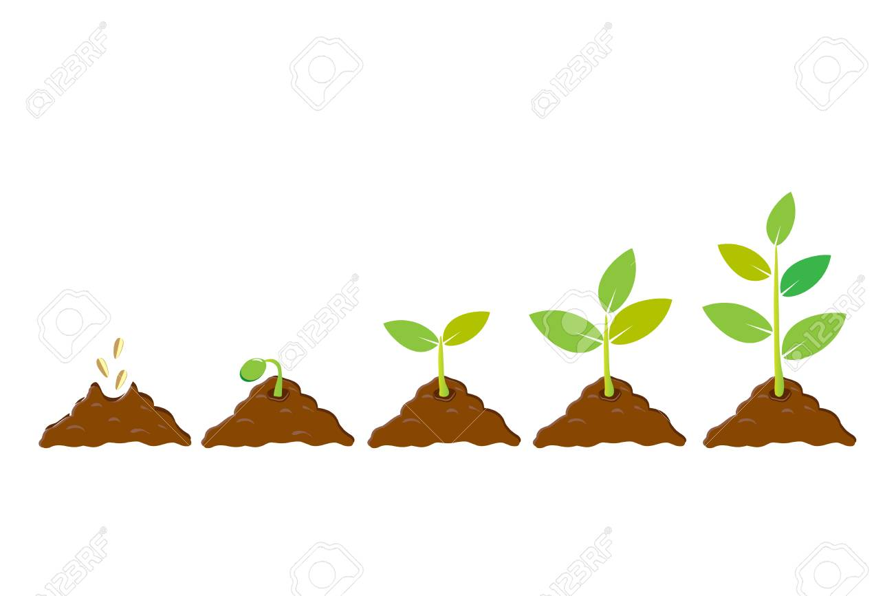 Planting seed sprout in ground. Infographic sequence grow sapling. Seedling gardening tree. Icon, flat isolated on white background. Vector illustration - 89714476