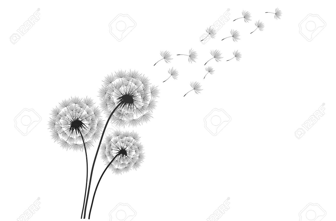 Black silhouette with flying dandelion buds . Vector on a white background - 160140980