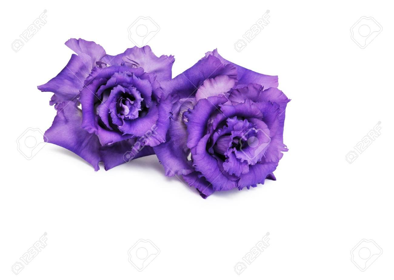Purple flowers eustoma isolated on white stock photo picture and purple flowers eustoma isolated on white stock photo 63297845 mightylinksfo