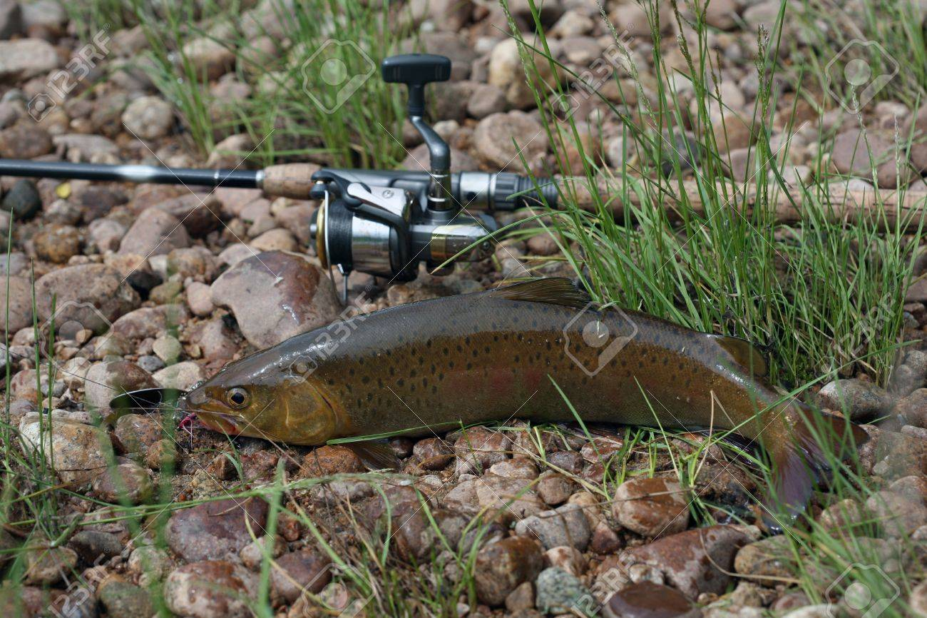 spinning sports trout fishing success stock photo, picture and, Fly Fishing Bait