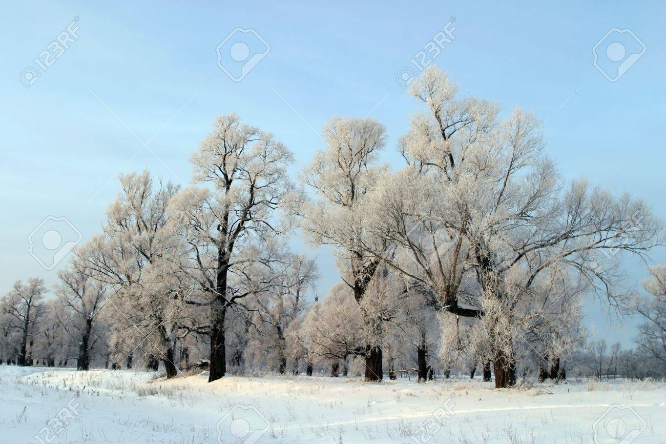 a long walk in nature snowy Russian winter Stock Photo - 19392704