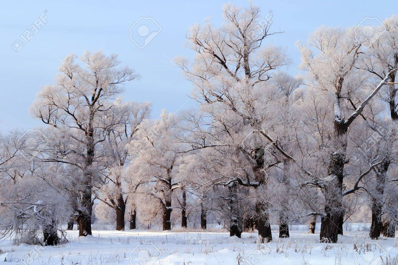 a long walk in nature snowy Russian winter Stock Photo - 19879569