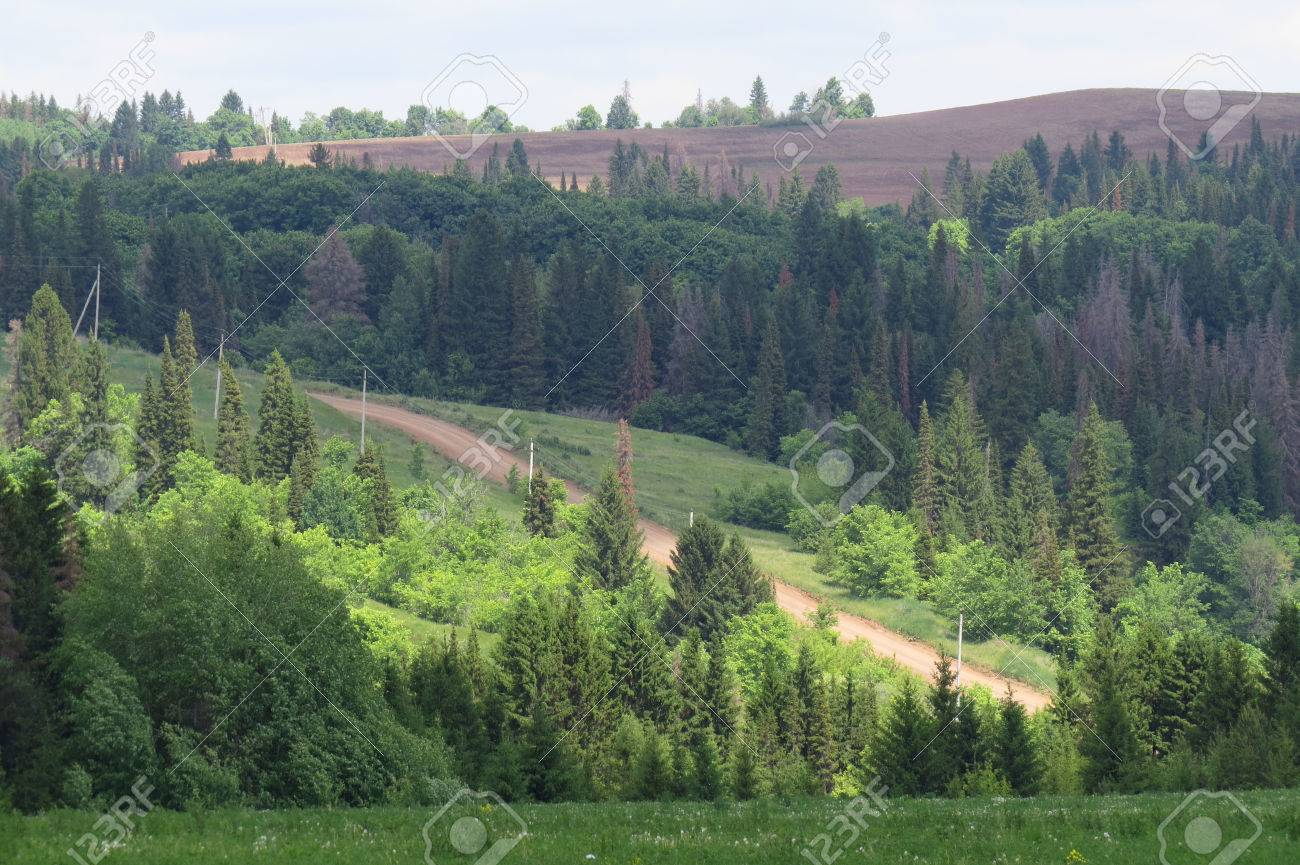 summer landscape of endless fields and forests on a clear sunny day Stock Photo - 27262165