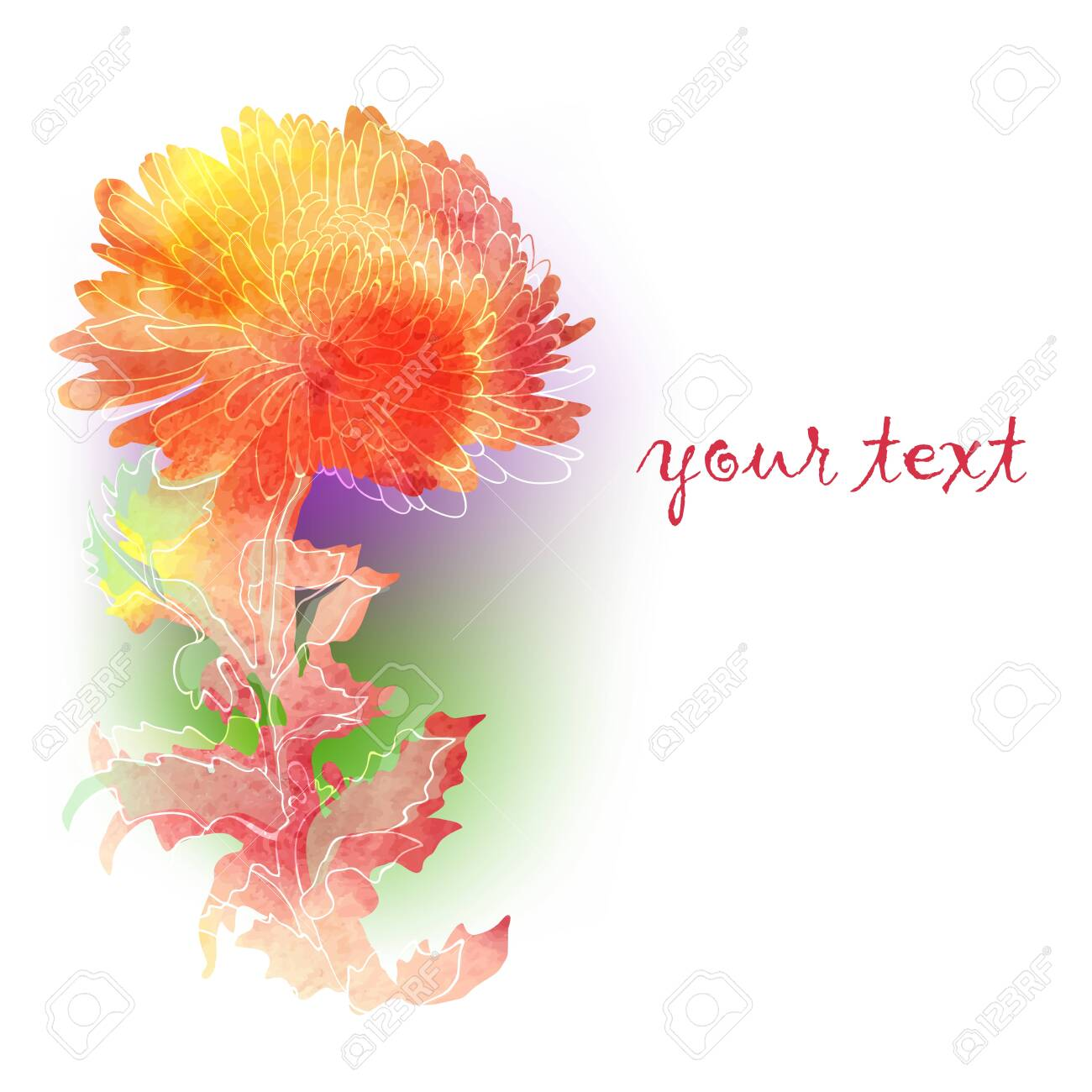 Watercolor background with colorful chrysanthemum. Vector illustration - 140222275